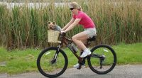 Where to spot Dog basket online to make dogs comfort?